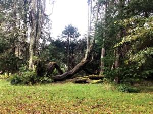 Trees at Armandale